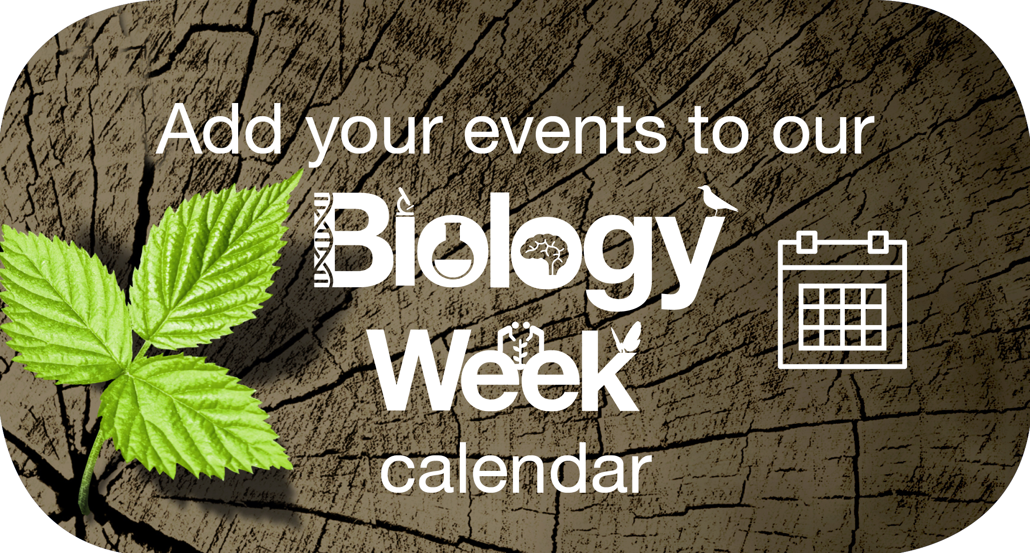 Biology Week calendar button tree