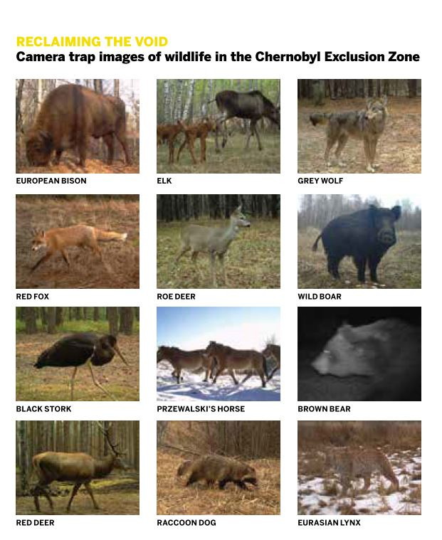 The wildlife of Chernobyl: 30 years without man