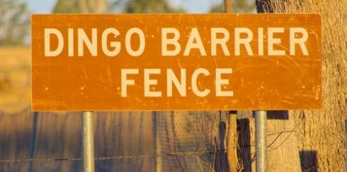 Fences dingo incopy