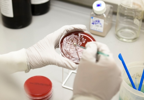 An image of a red petri dish being scraped by a scientist.