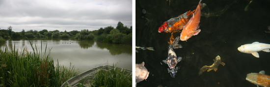 Fishery facilities at Sparsholt College