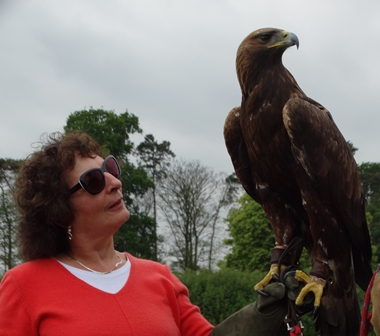 Yorkshire Birds of prey visit small