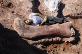 A Big Deal - giant dinosaur discovered